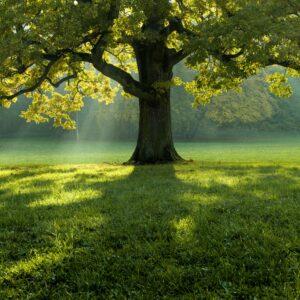 ilustračná foto - strom