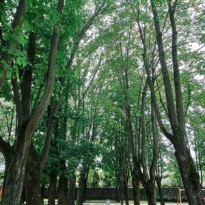 Park Ľudovíta Štúra 1